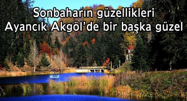 Ayancık Akgöl'de sonbaharın renk kompozisyonu
